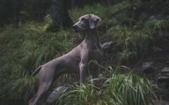 Le malattie parassitarie dei cani