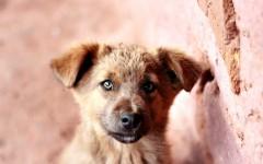 Leptospirosi nei cani malattie cani