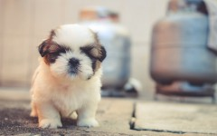 Dog news: Tiny dog hearts big dog