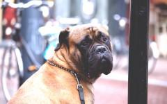 Ristoranti che accettano cani: dove mangiare con Fido? Scoprilo con noi!
