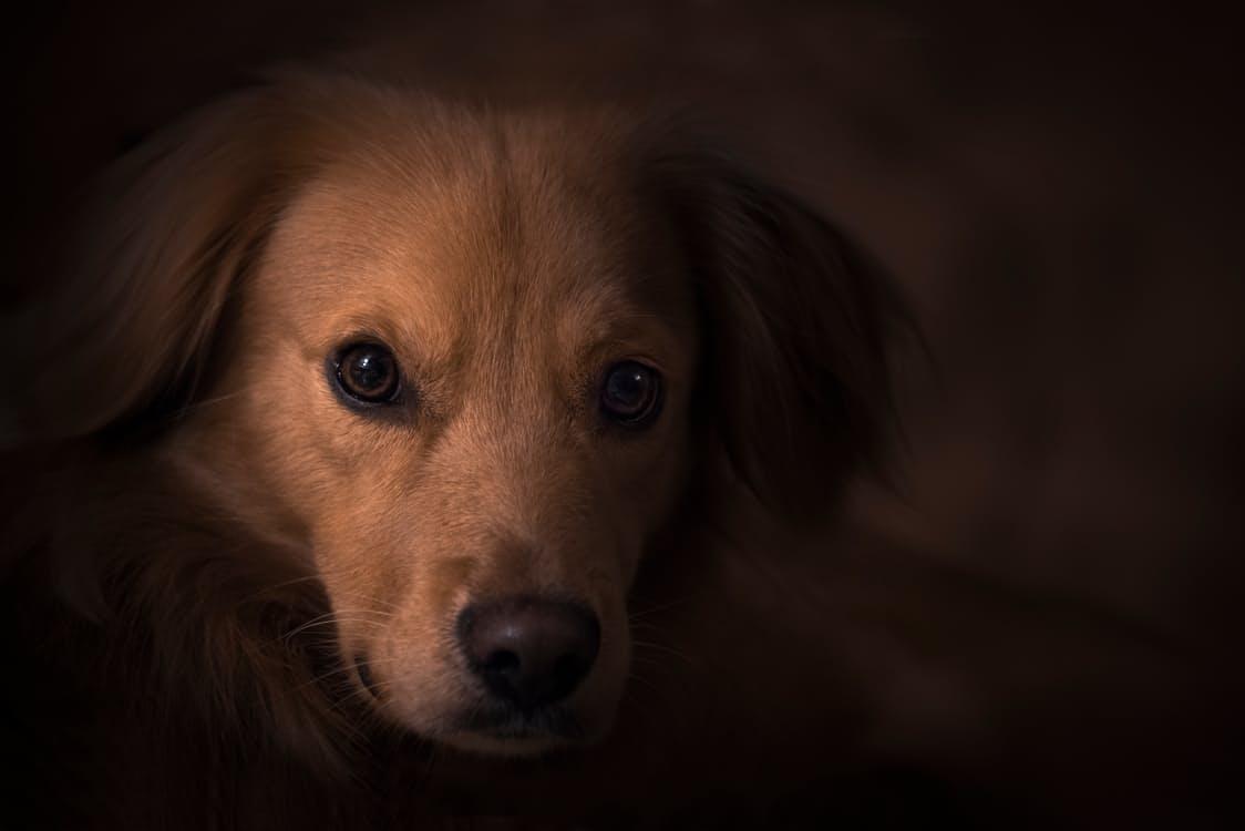 Il cane vomita malattie cani