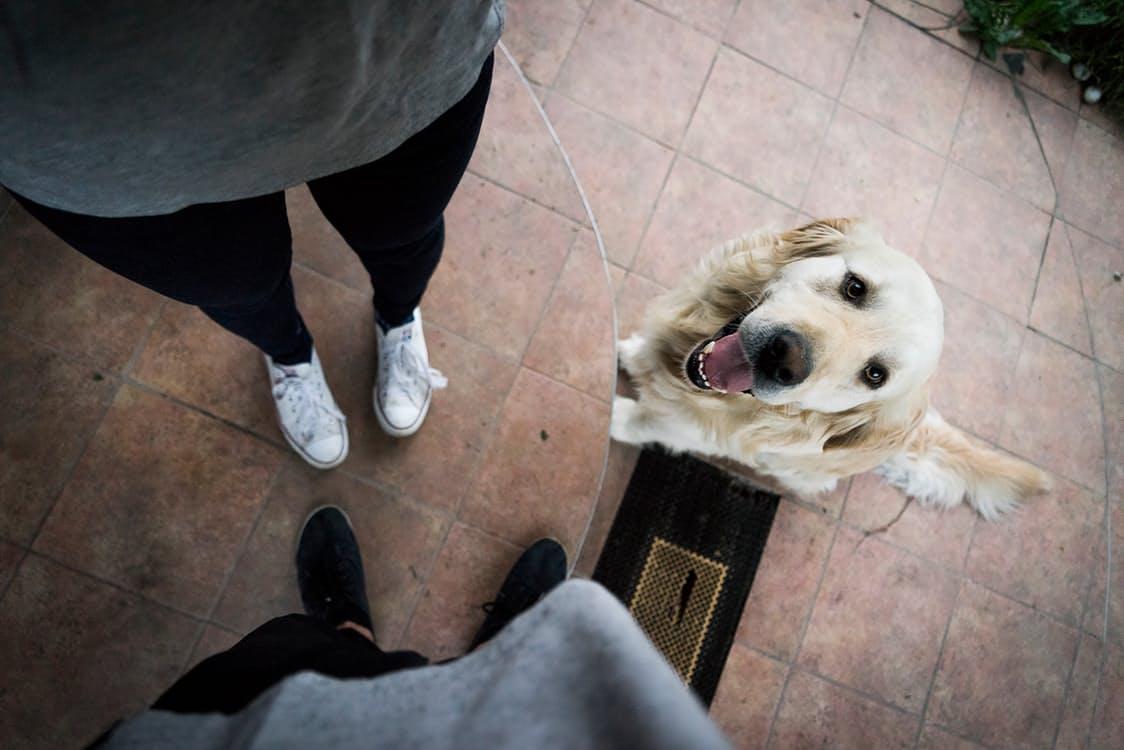 Come educare un cane: i 3 comandi per avere un cane educato