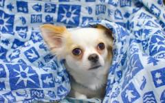 Cani di piccola taglia razze cani
