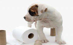 How to potty train a puppy without dying in the process