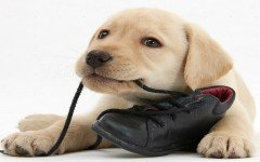 Dog training: stop your dog chewing on things