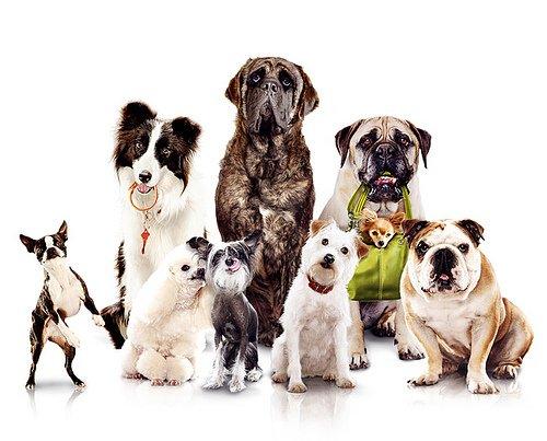 Razas de perros: Origen y caracteristicas