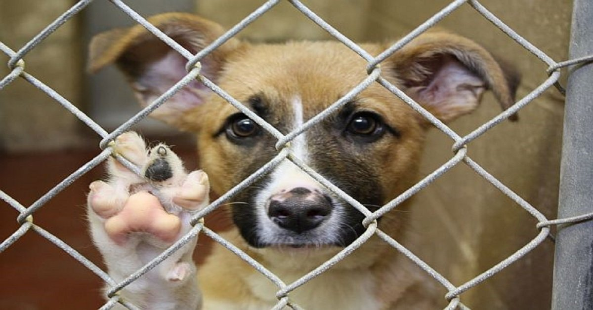 Abandoned dog in rescue shelter ignored by her owners