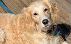 Adozione dei cani: ecco la procedura da seguire