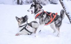 Resfriados en perros: cómo aprender a detectarlos resfriado canino