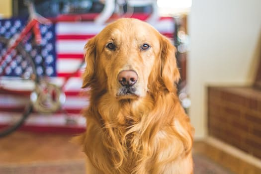 Dog News: Rescued dogs became Service dogs