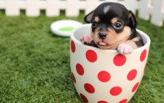 Lovely small dog breeds