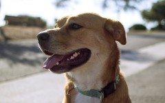 Ipotiroidismo nel cane malattie del cane