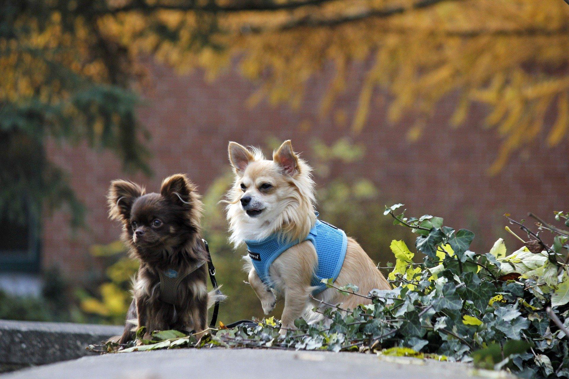 Cani piccoli: la moda dei cani di piccola taglia