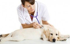 Pronto intervento veterinario: cosa fare quando Fido sta male, e come agire in caso di emergenza!