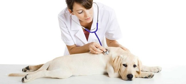 Pronto Fido, il pronto intervento veterinario