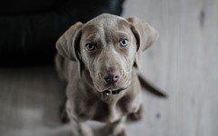 La sterilizzazione del cane: tutte le informazioni