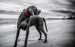 Enfermedades Caninas: Artrosis canina perros ancianos