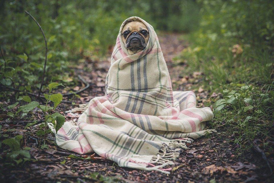 Enfermedades Caninas: Cistitis Canina sintomas y tratamiento orina