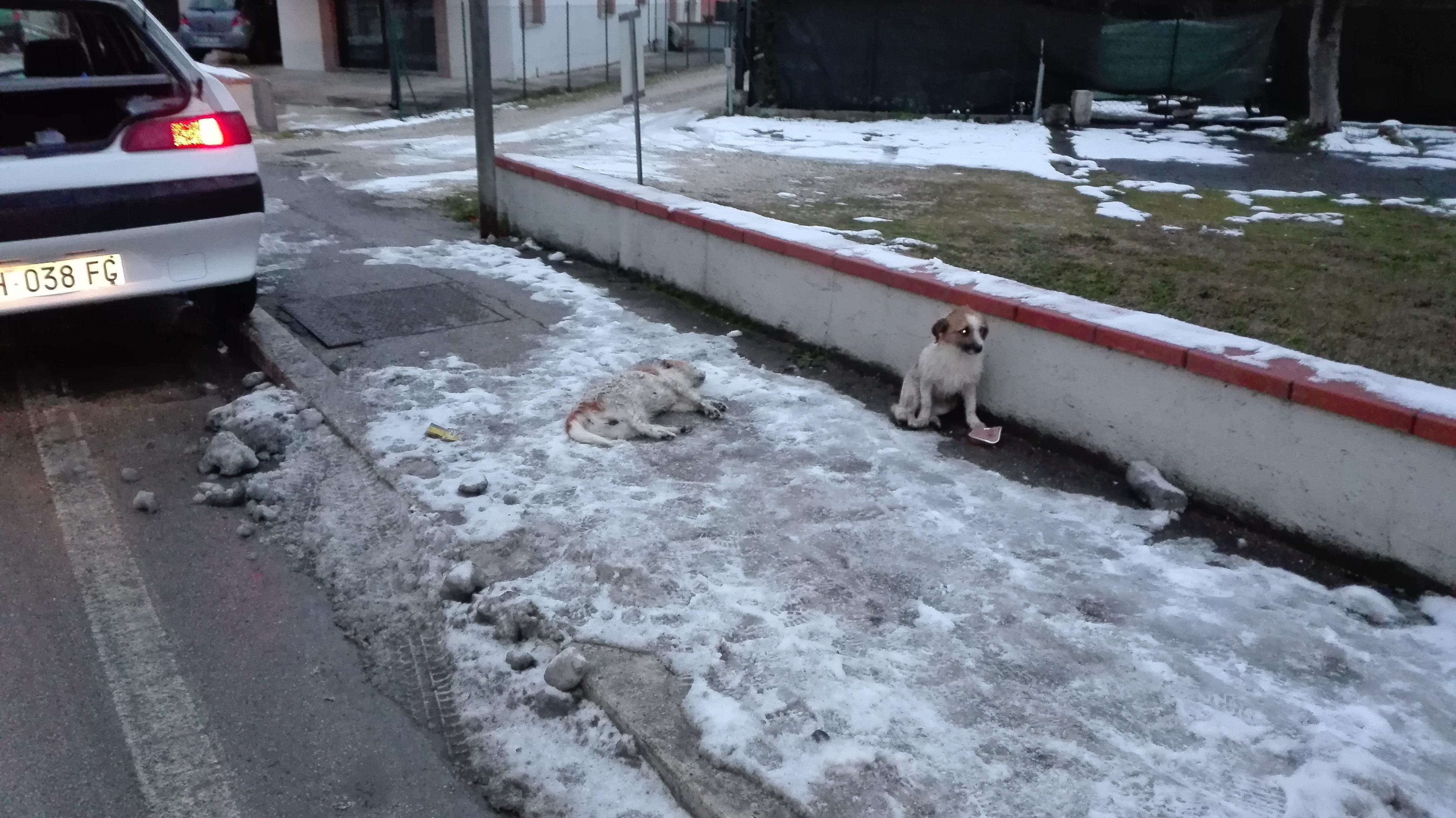 Teramo: cane veglia su compagno morente