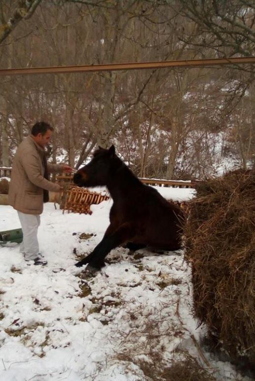Cavallo immerso nella neve salvato in extremis