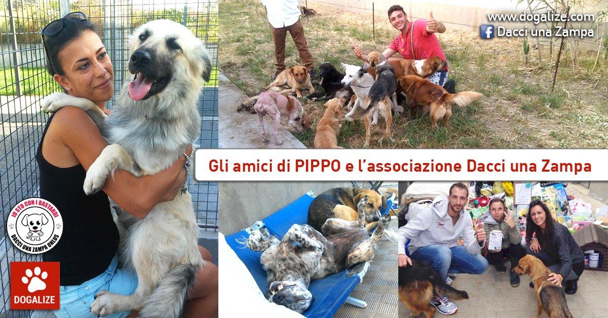 Dacciunazampa Onlus: aiutamo l'associazione di Pippo