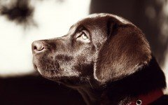 epilepsia canina convulsiones