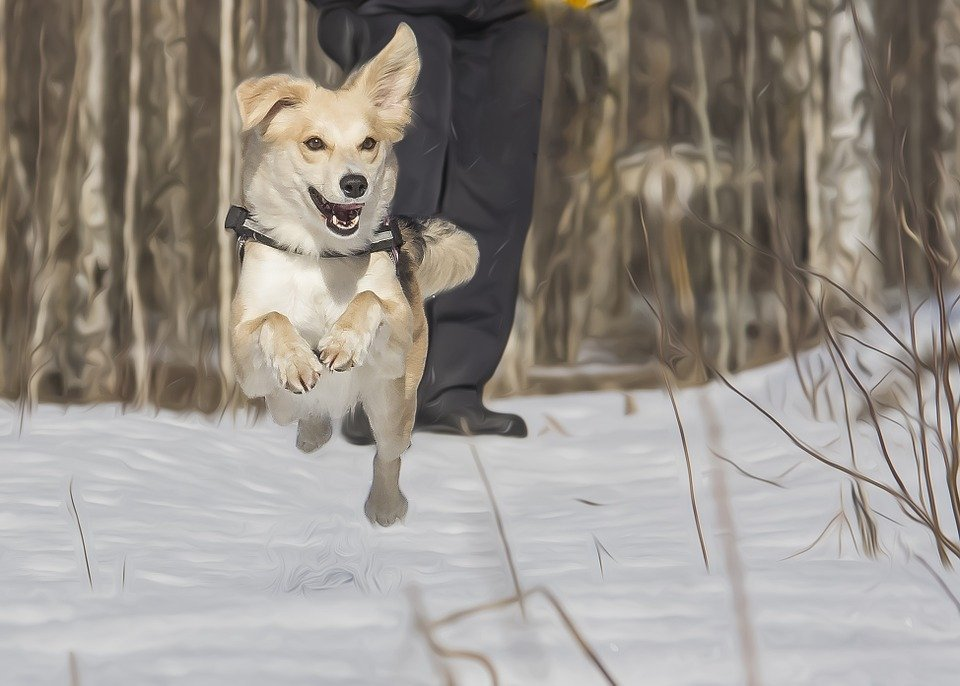 los mejores juegos para tu perro juego