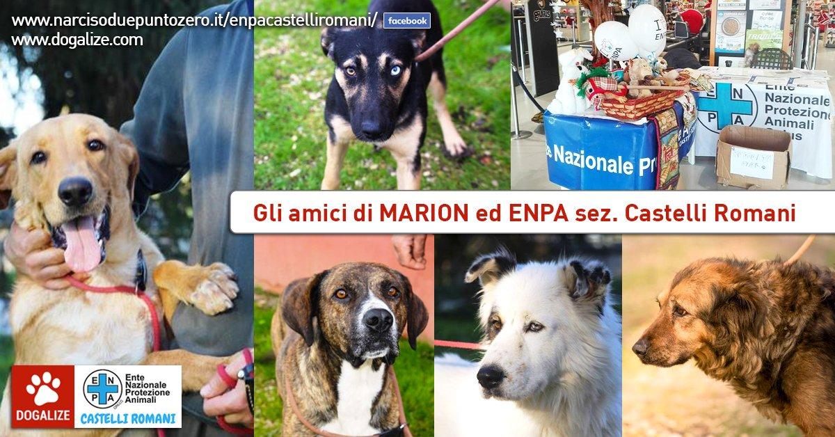 Enpa di Castelli Romani: aiutamo l'associazione di Marion