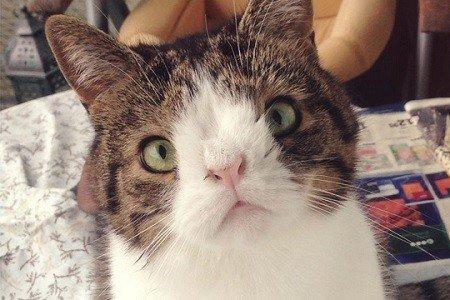Gatto down: la sindrome colpisce anche i felini
