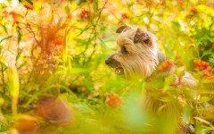 plantas venenosas para perros intoxicación canina
