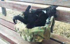 Salem, il gatto randagio adottato da un soldato