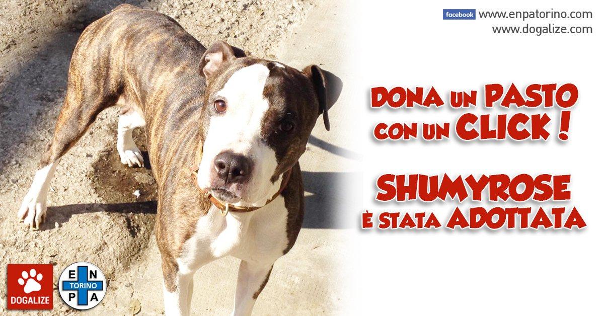 Adottata a distanza ShumyRose dell' Enpa di Torino