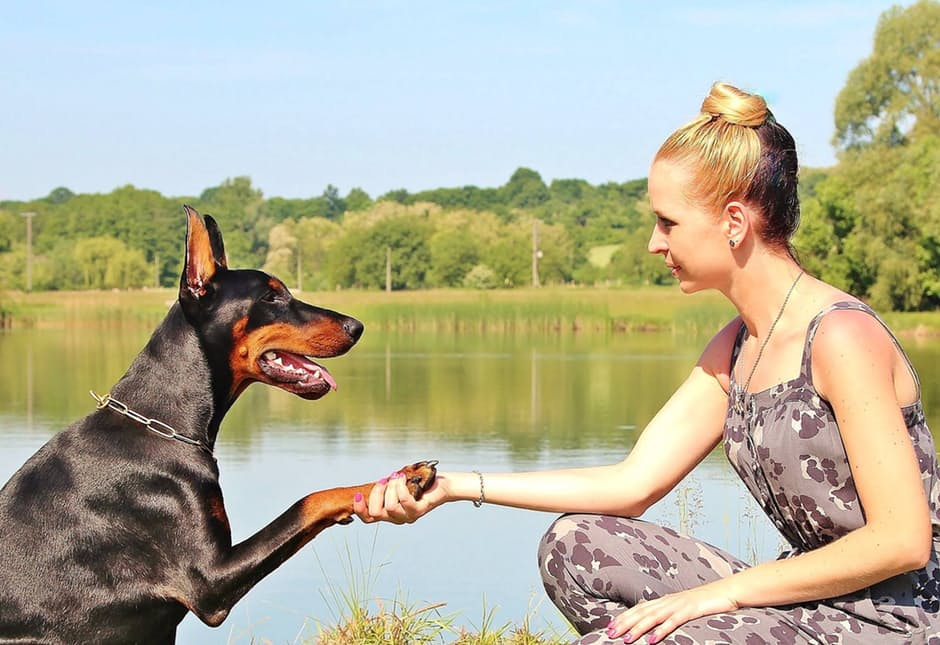 How can I teach dogs some commands? Discover it into Dogalize!