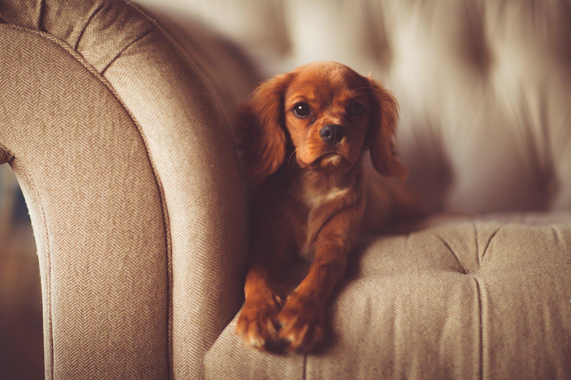Come educare un cucciolo e come educarlo in casa