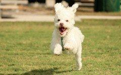 los perros mas rapidos
