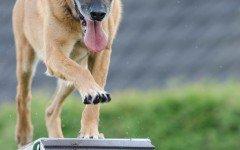 Come addestrare un cane per la protezione civile