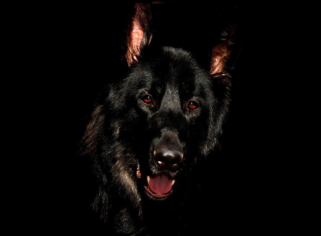 Occhi rossi nel cane: le cause, i sintomi e i rimedi