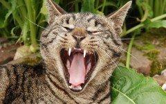 Cambio dei denti del gatto: come e quando avviene