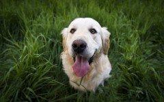 Come educare un cane adulto a fare i bisogni fuori