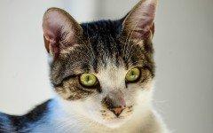 L' acne felina: quando e perché si manifesta
