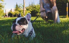 Come educare e addestrare un cane: le nozioni di base