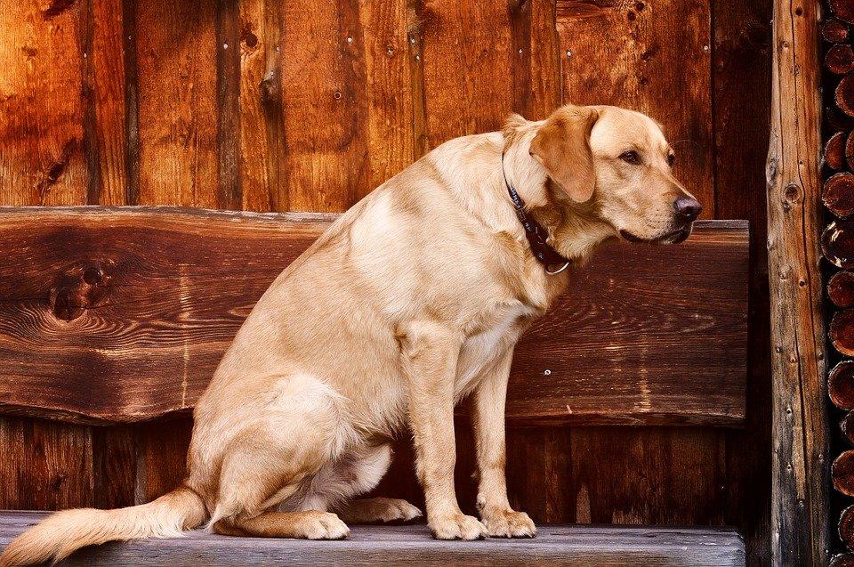 gusanos en perros