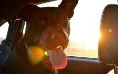Passaporto cane indispensabile per andare all'estero