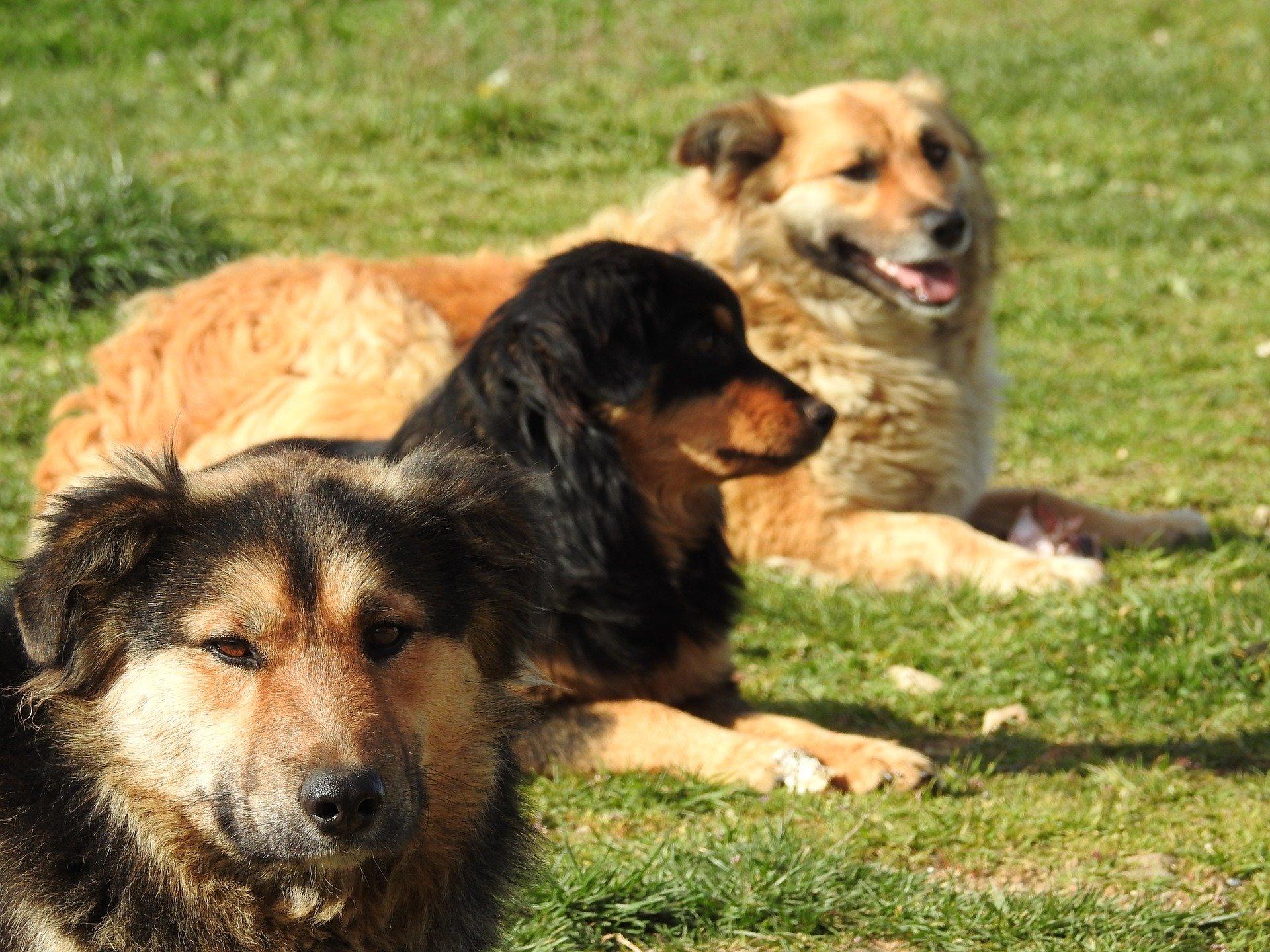 Cani più intelligenti: quali razze di cani lo sono?