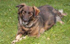 Addestrare un cane che scappa attraverso i comandi base