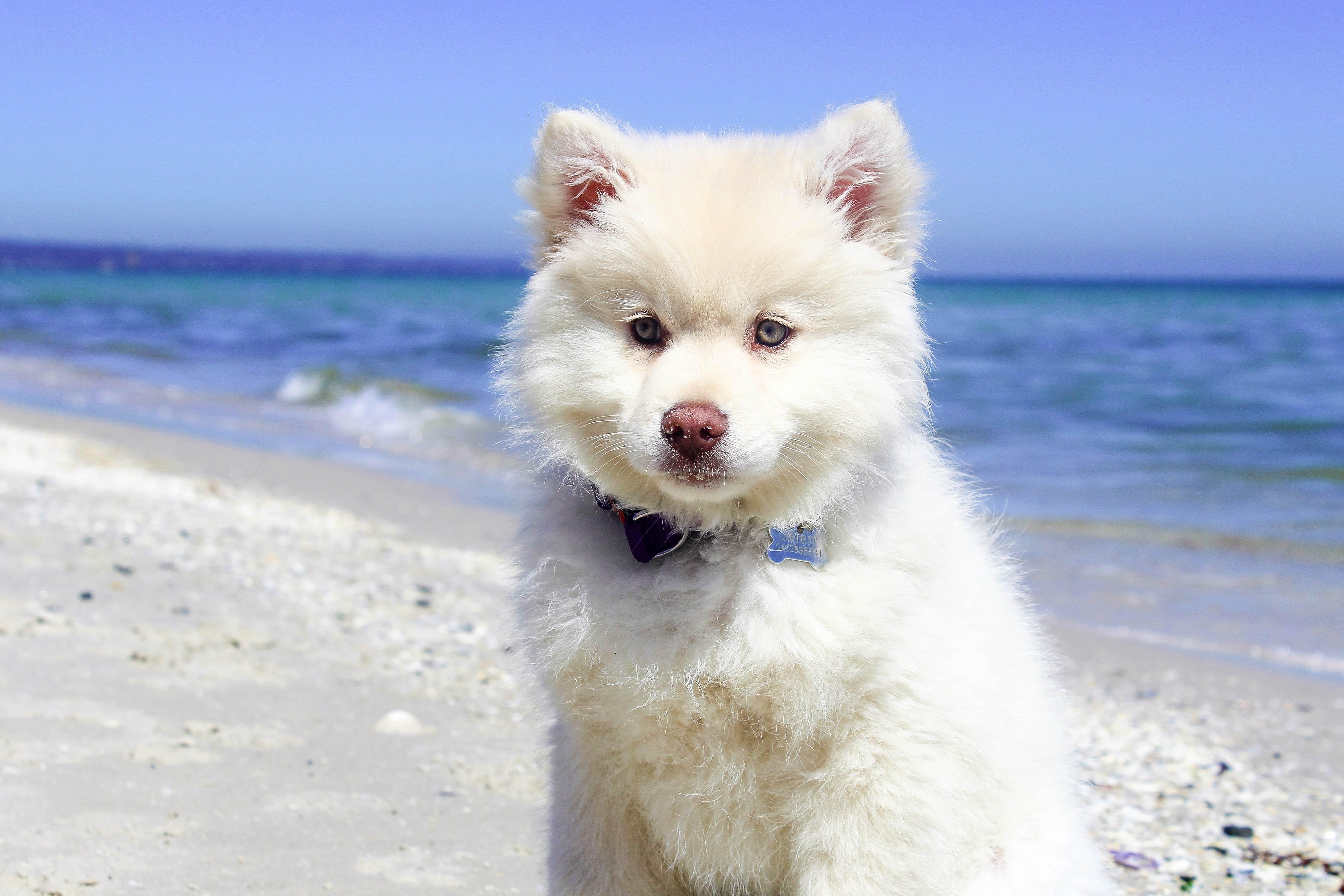 Cura del cane al mare: le regole fondamentali