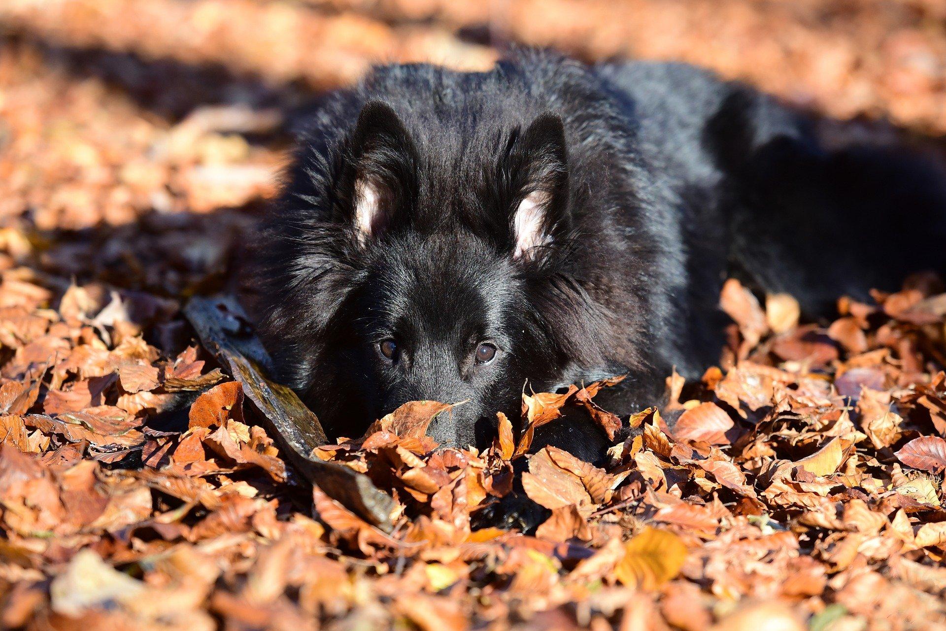 Alimentazione del cane con pancreatite: la dieta