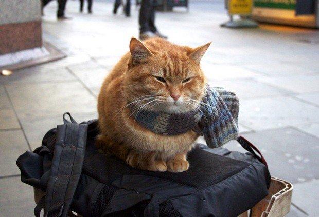 Film sui gatti. Può un gatto diventare una star?