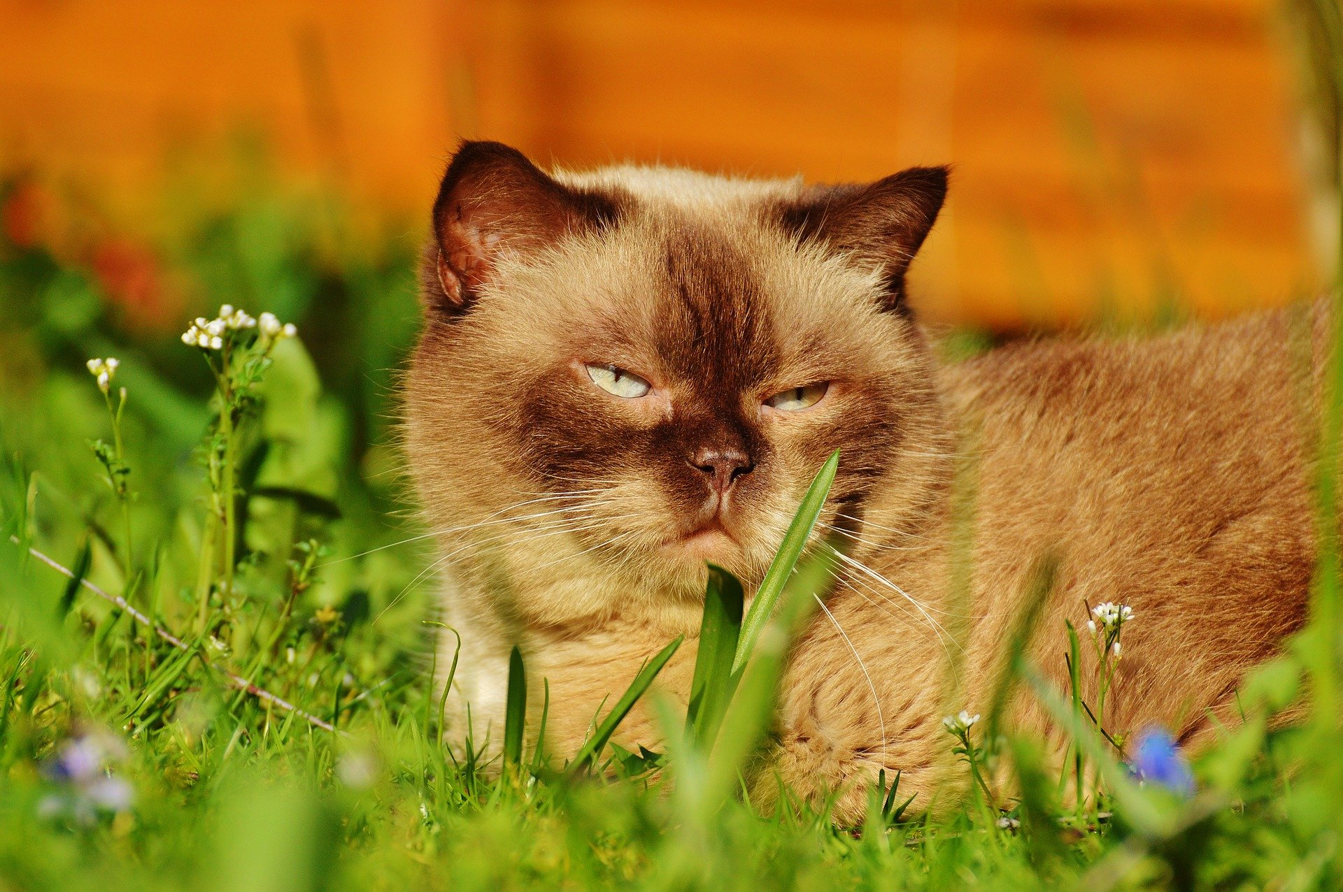 Cistite nel gatto, le cause, i sintomi e i rimedi