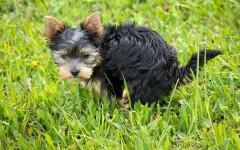 Dog Diarrhea - Causes, symptoms, and treatment